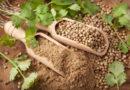 8 beneficios comprobados de las semillas de cilantro